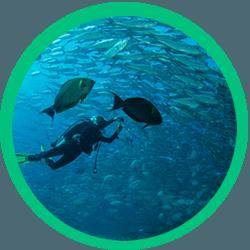 Plenty Fish in the Maui Sea