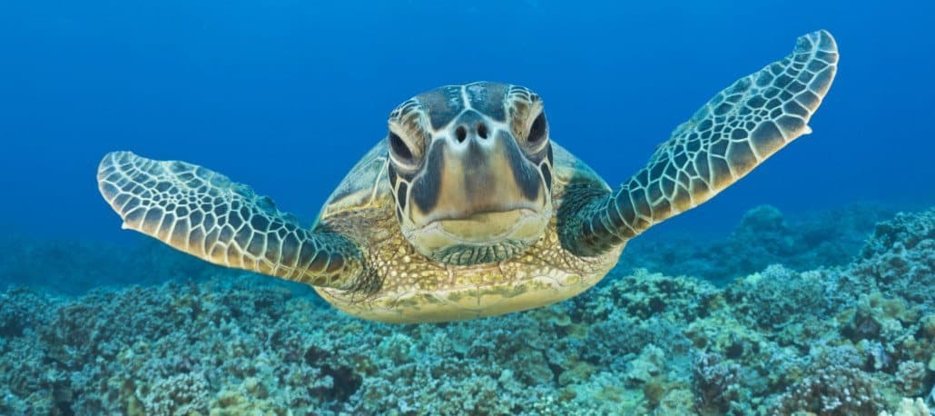 Maui Scuba Diving Lessons, Tours And PADI Certification