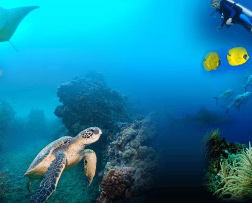 my favorite maui dive sites