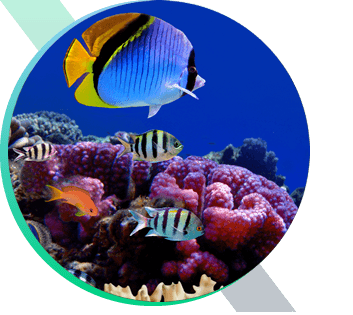 Tropical fish in Maui reef