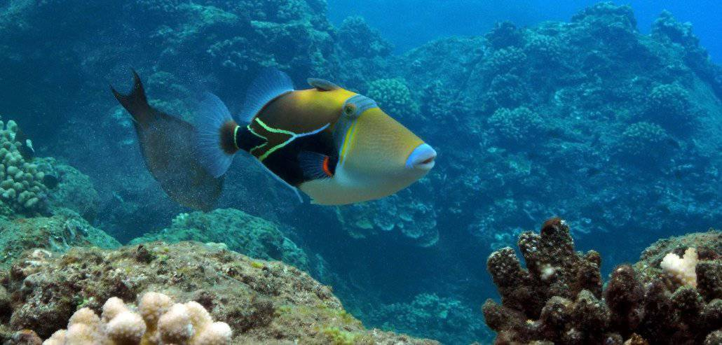 Maui Scuba Diving Photos And Video