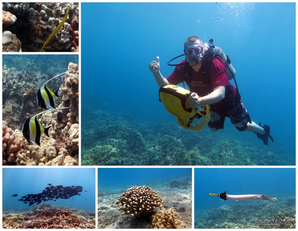 5 Things You Will Learn On Your First Maui Scuba Dive
