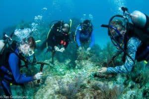 scuba experience