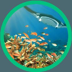 Maui scuba tours