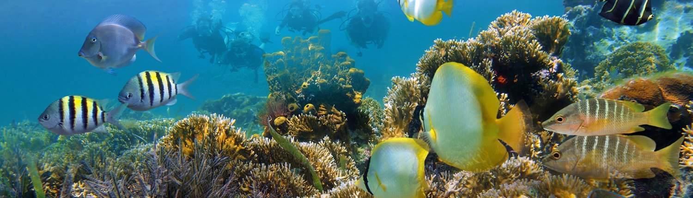 custom dives Maui