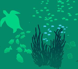 maui sea life