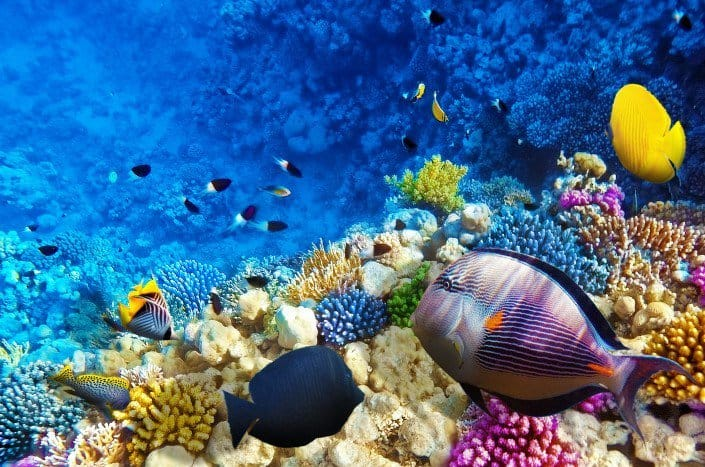 Beautiful Underwater world