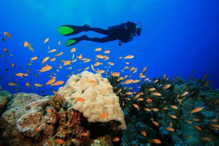 Scuba Diving Maui